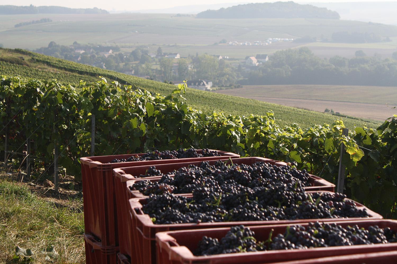https://www.champagne-thevenet-delouvin.fr/wp-content/uploads/2020/03/7-carte-noire-insolite-meunier-bd.jpg